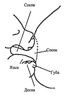 правильный захват груди - иллюстрация 7